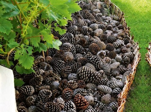 Fill Plant Beds with Pinecones